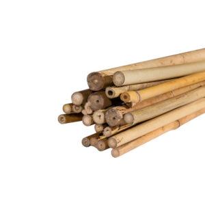 тонкінський-бамбук